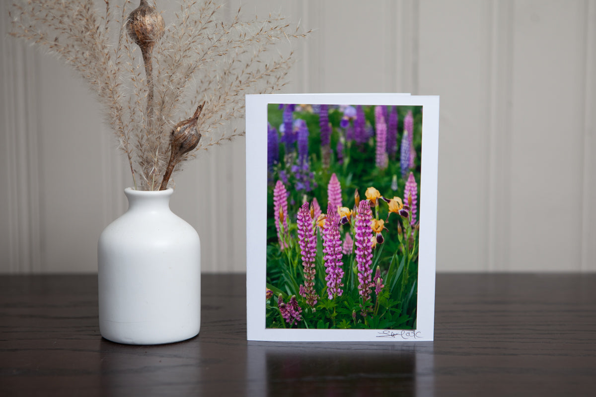 photo greeting card of pink lupines in the garden with some yellow irises in the background. The 4x6 photo is mounted to white card stock and signed by the artist Laura Cook in the bottom right corner.