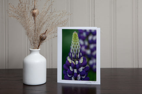 Photo greeting card featuring an image of a close up of a purple and white lupine in the garden. Photo is mounted to white card stock and signed by the artist Laura Cook in the bottom right corner.