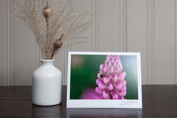 photo greeting card of close up of a pink lupine with a bumble bee hovering beside the petal to collect nectar.. The 4x6 photo is mounted to white card stock and signed by the artist Laura Cook in the bottom right corner.