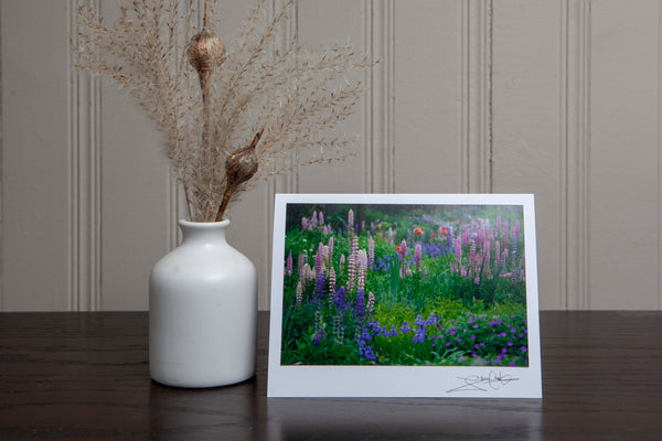 photo greeting card of lupines in the garden. The 4x6 photo is mounted to white card stock and signed by the artist Laura Cook in the bottom right corner.
