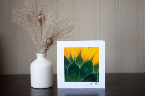 Photograph of sunflower back & petals mounted on white card stock make a lovely greeting card original photograph by Laura Cook of Vision Photography