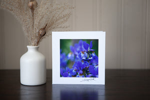 a photograph of purple iris mounted to white cardstock to make a photo greeting original art created by Laura cook