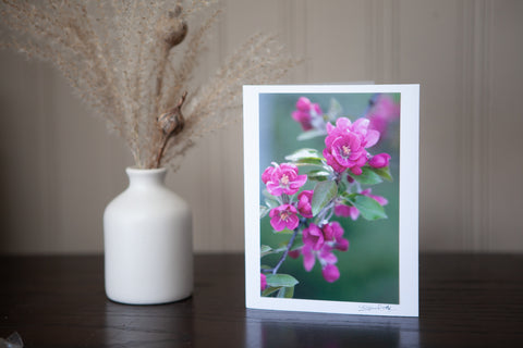 photo greeting card featuring image of deep pink spring buds ( crab apple blossoms ) mounted on a white card stock and signed by the artist laura cook in the bottom right hand corner