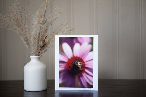 photography greeting card featuring a 4x6 print of a bee collecting nectar from the centre of an echinacea flower mounted to sturdy white cardstock and signed by the artist Laura Cook in the bottom right corner