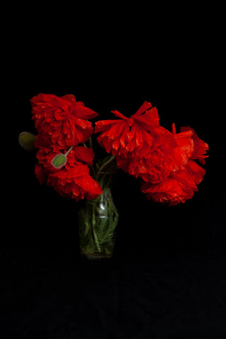 A dramatic photo of poppies in a vase photo by Laura Cook, Vision Photography