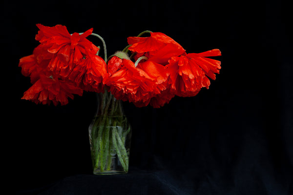a bouquet of poppy wildflowers, photo by Laura COok of Vision Photography
