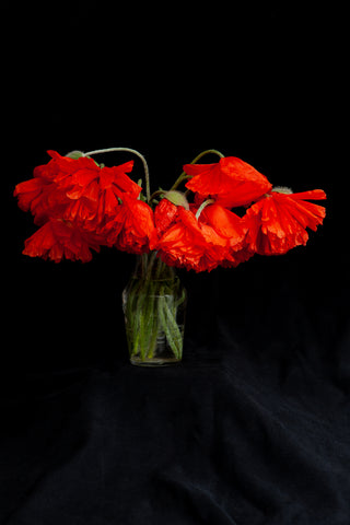 dramatic photo of poppies in a vase. Photo by Laura Cook of Vision Photography