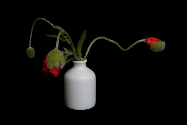a photo of a small bouquet of bidding poppies in a vase , photographed by Laura Cook Vision Photography