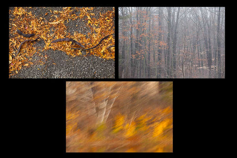 Fall photography greeting cards featuring a misty forest, rich vibrant yellow leaves on the ground,  and an abstract photo impressionism picture of white birch and vibrant orange and yellow fall leaves Photo by Cambridge Ontario Photographer Laura Cook of Vision Photography