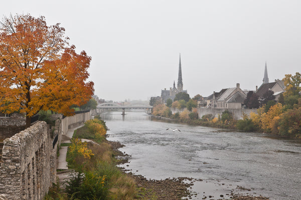 """A Grand View'  a photograph by Cambridge photographer Laura Cook of Millrace Park in the fall , looking up the Grand River towar Main Street Bridge and Central Prespbyterian, a seagul is flying up the middle on a foggy day"