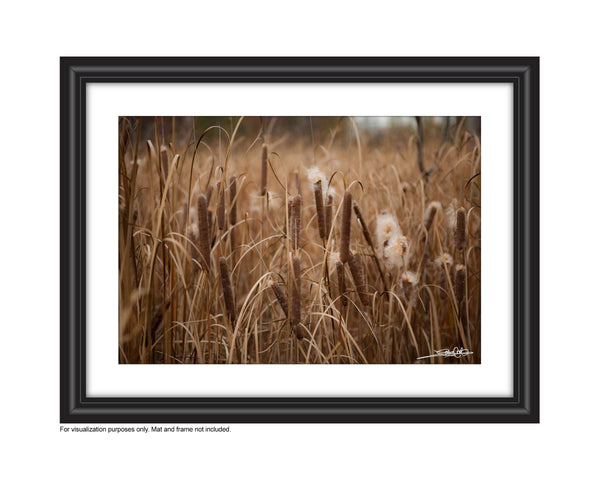 Photos of Bullrushes Photo by Cambridge Ontario Photographer Laura Cook of Vision Photography