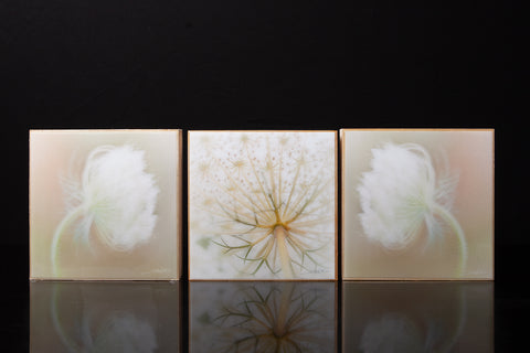 "Wall Art Featuring Laura Cook's Photographs ""Dream"" encased in resin"