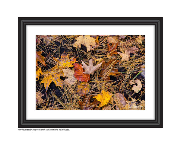 Rich earthy photograph of fall leaves on the forest floor in the autumn Photo by Cambridge Ontario Photographer Laura Cook of Vision Photography