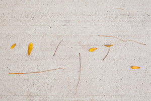 Yellow Fallen leaves on the concrete sidewalk look like hieroglyphics a fun photography Photo by Cambridge Ontario Photographer Laura Cook of Vision Photography