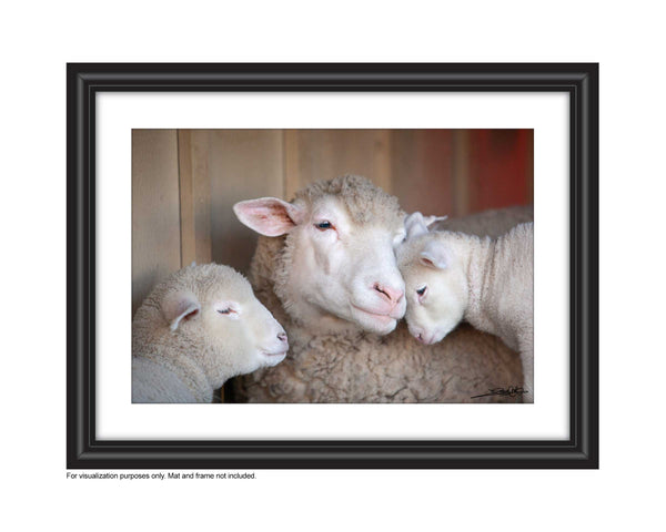 wall art sheep