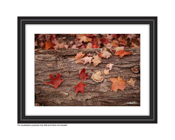 Gorgeous warm tones in this photograph of red and orange maple leaves on a tree stump on the forest floor Photo by Cambridge Ontario Photographer Laura Cook of Vision Photography
