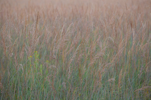 grasses swaying in the warm wind There's beauty in the simplicity of nature Photo by Cambridge Ontario Photographer Laura Cook of Vision Photography