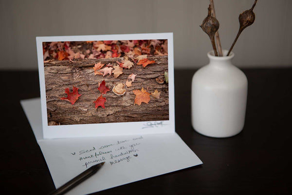 "Photography Greeting card featuring ""Maple"" a close up view of fall maple leaves on bark in the forest in the autumn Photo by Cambridge Ontario Photographer Laura Cook of Vision Photography"