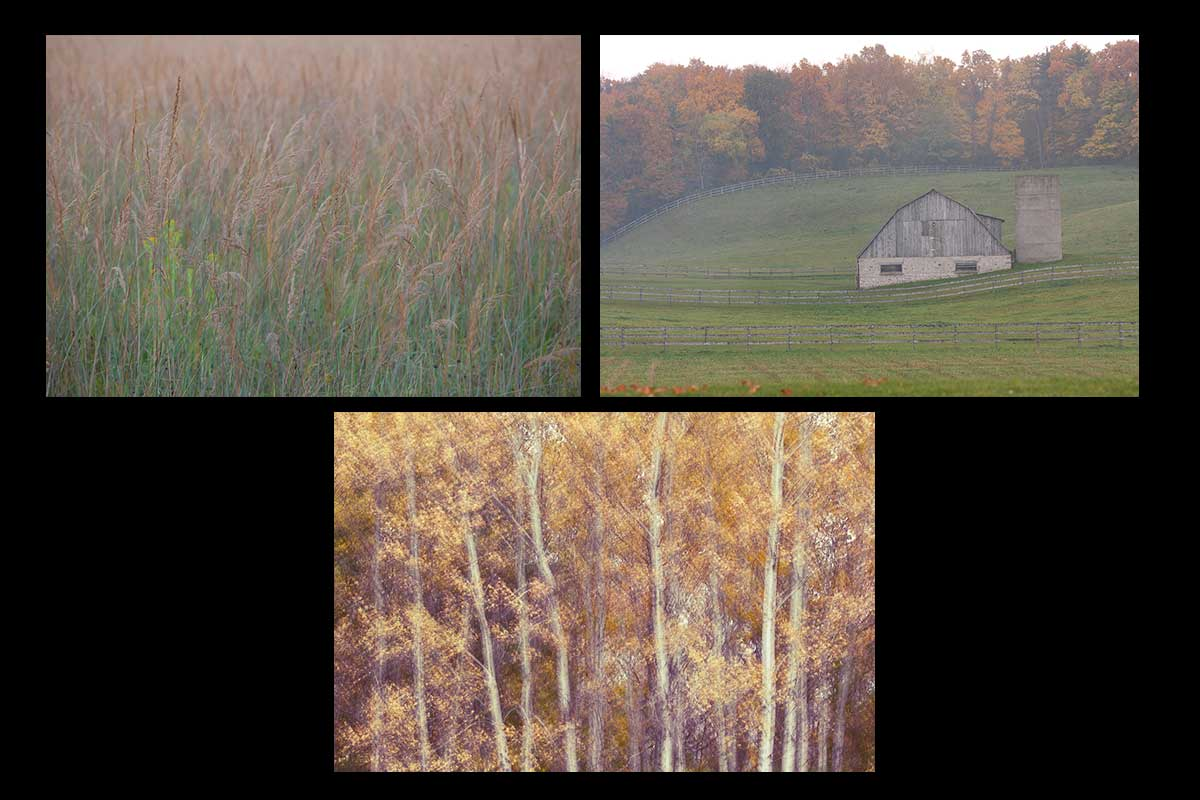 Photos in the scenic country greeting card set features beauty in the simple things of life, waving grasses in the warm fall air, a misty barn with the rolling hills and fall colours of the trees in the background, and a simple stand of aspens, with their richly coloured autumn leaves gently blowing all photos by Cambridge Ontario Photographer Laura Cook of Vision Photography