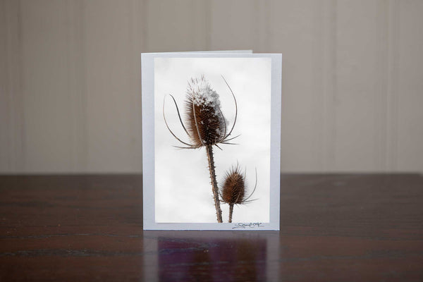 Christmas greeting card featuring an image of two teaseles, one is snow capped in a wintery white field Photo by Cambridge Ontario Photographer Laura Cook of Vision Photography