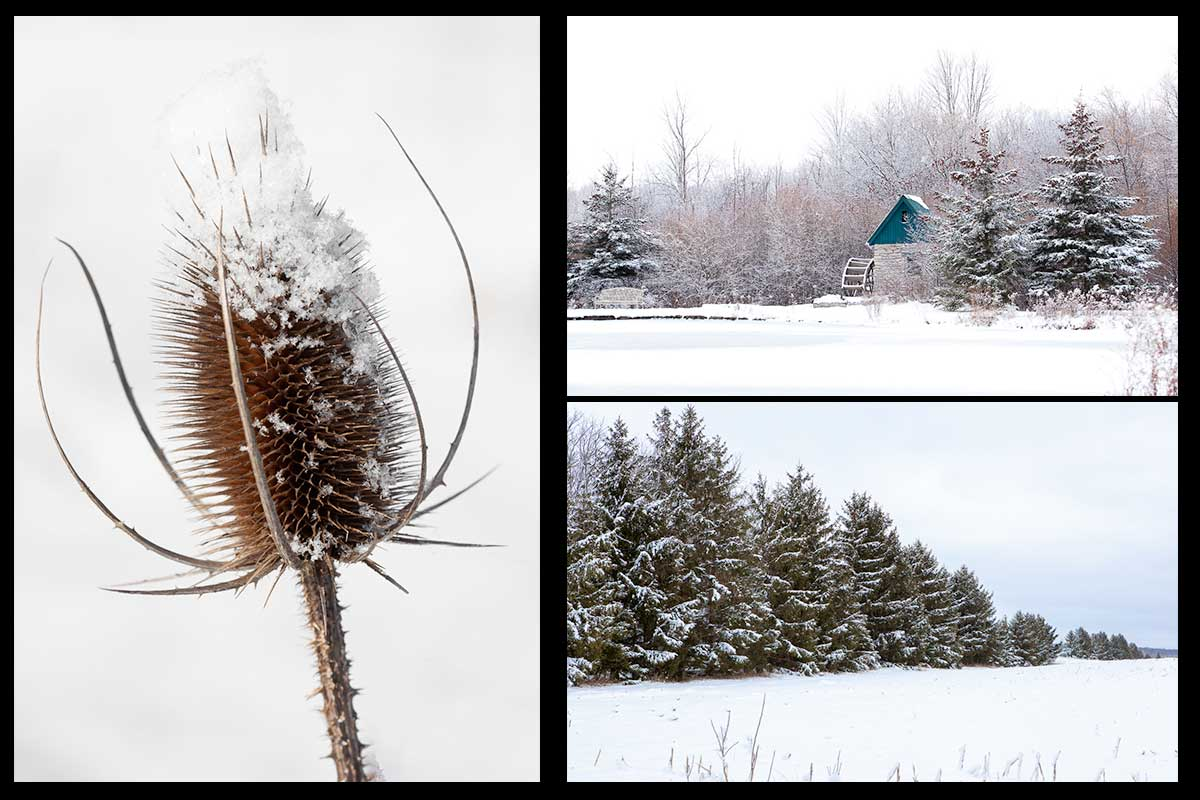 Hand made photo cards with gorgeous winter scenes make these the perfect holiday cards this Christmas. Three distinct images featuring a snow capped tease cone, a field with glorious frosted pines and a view of Churchill Park mill in Cambridge with snowy trees surrounding it.Photo by Cambridge Ontario Photographer Laura Cook of Vision Photography