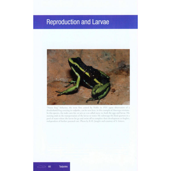 Aposematic Poison Frogs (Dendrobatidae) of the Andean Countries: Colombia, Bolivia, Ecuador, Perú and Venezuela