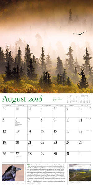 Calendario 2018 Audubon Nature