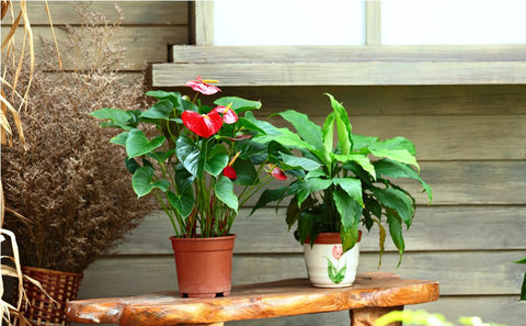Outdoor Pots and Plants