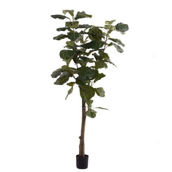 POTTED FIDDLE TREE PLF-027