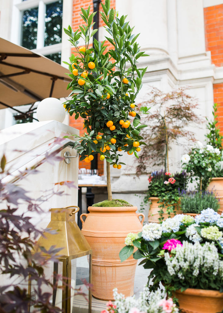 Summer Arrives at The LaLit London