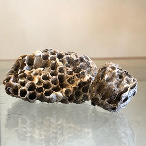 Wasp Nests (Removes Curse, UnHex, Uncross, Fidelity)