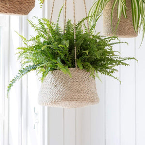 Hanging Plant Pot Tapered