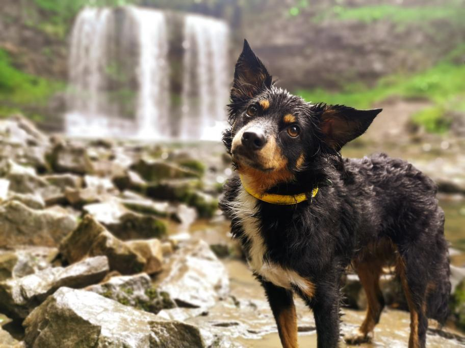 Best Water Resistant Dog Collars To Make A Splash!