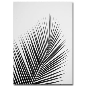 Black White Palm Tree Leaves Canvas Posters and Prints