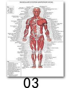 Human Anatomy Art Poster Print Body Map Silk Painting