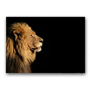 Large Wild Lion Animals Poster Wall Art Canvas Prints