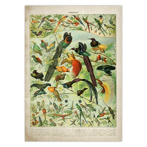 Nature Vintage Poster  Wall Art Posters and Prints Canvas