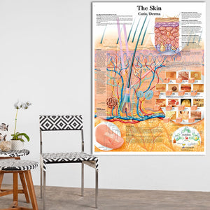 Anatomy Dissection Skin Anatomical Charts Posters Laminated Canvas