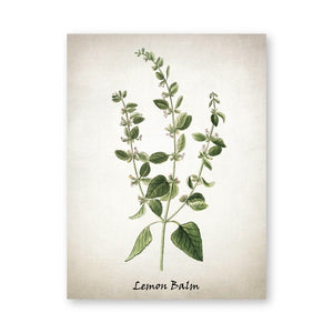 Herb Canvas Art Painting Vintage Herbal Illustrations Posters and Prints Culinary Herbs