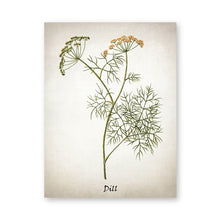 Load image into Gallery viewer, Herb Canvas Art Painting Vintage Herbal Illustrations Posters and Prints Culinary Herbs
