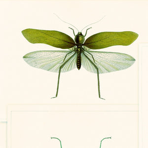 MTG Wallpaper Entomology Green WP20234