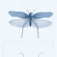 Load image into Gallery viewer, MTG Wallpaper Entomology Blue WP20235