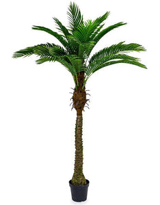Extra Large Potted Palm Tree