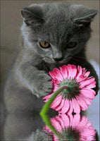 Cat with Flower Diamond Painting