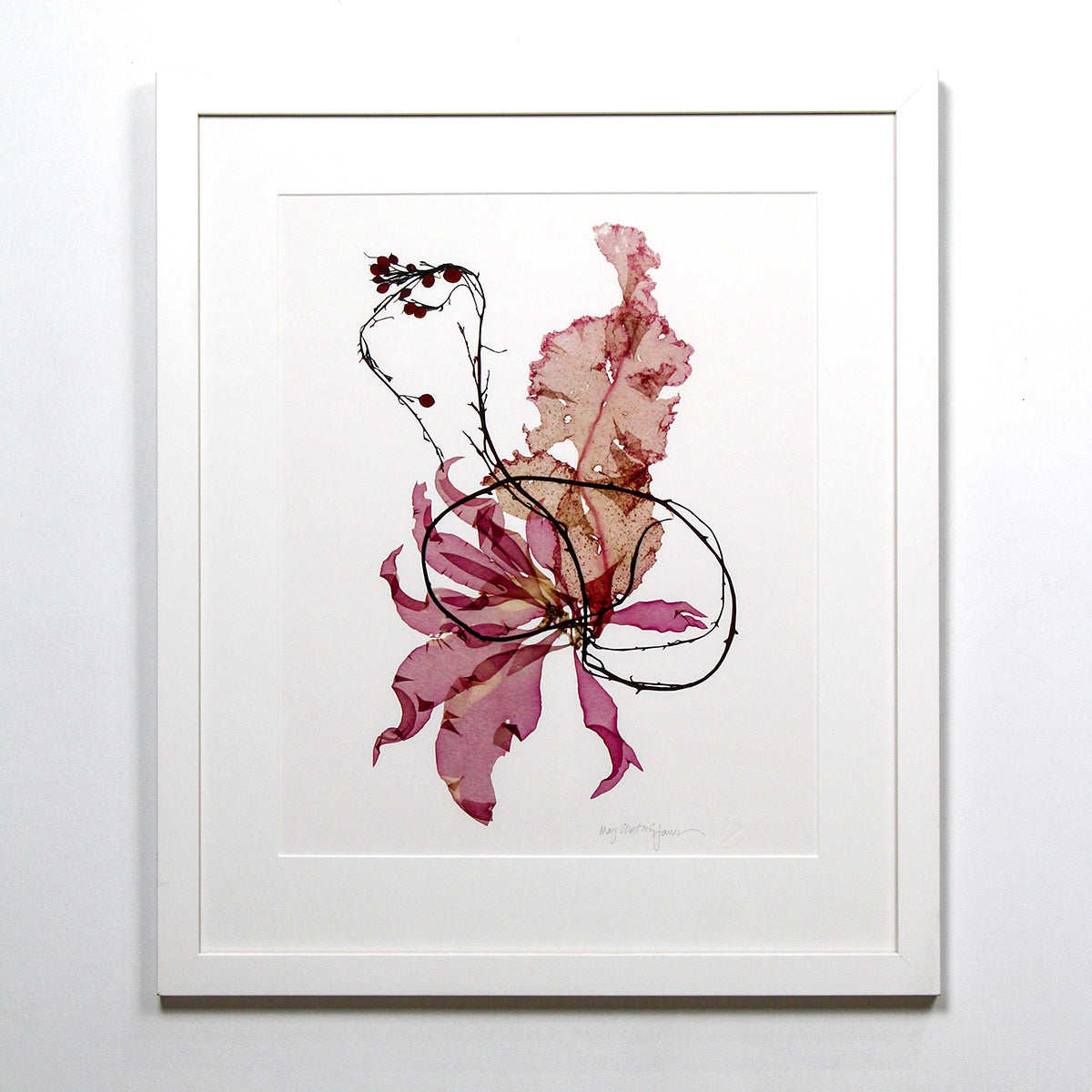 Seaweed Botanical Prints