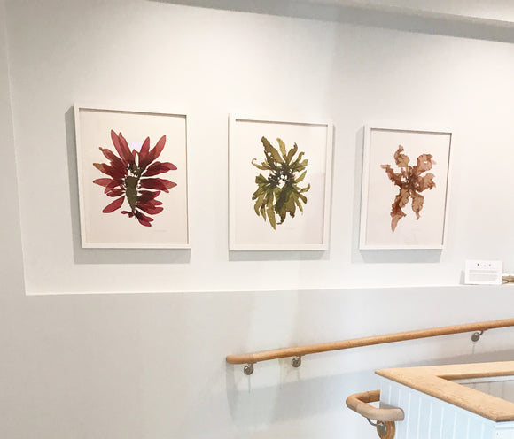 Marine Botanical Prints