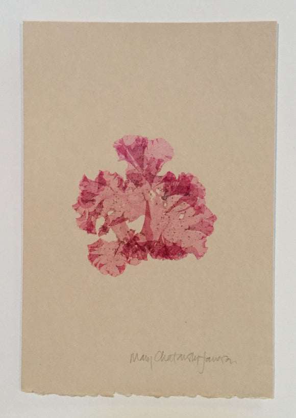 Original Marine Botanical Pressing: Atlantic Rose