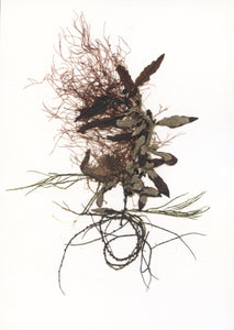 Original Marine Botanical Pressing: Kinetic Seaweed Study