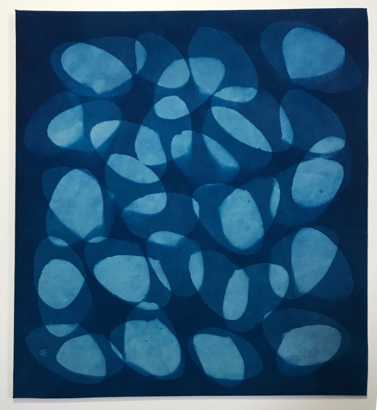 Cyanotype: Sea Clam Series