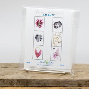 Atlantic Seaweed Card Package
